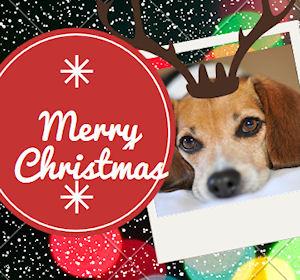 Biglietti Di Natale On Line.Biglietti Di Natale Con Le Cartoline Online