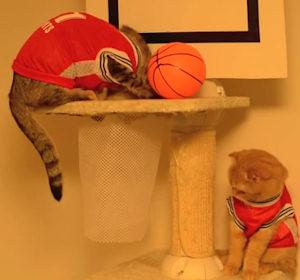 Video gatti campioni di basket - Immagini stampabili di pallacanestro ...
