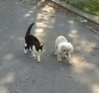 Gatto guida il cane cieco nella passeggiata