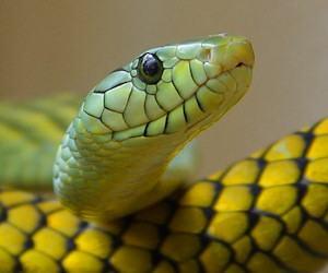 Barzellette sui serpenti - Serpente collegare i punti ...