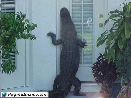 Chi bussa alla porta?