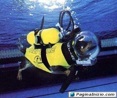 Esplorazioni subacquee per tutti