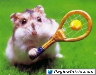 Il rat tennis
