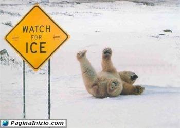 Orso avvisato, mezzo salvato!