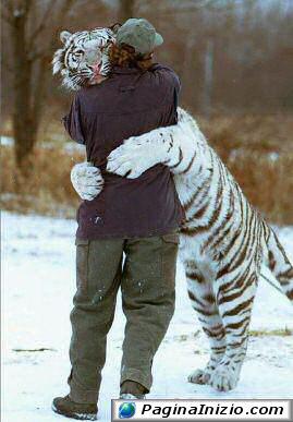 Un abbraccio felino
