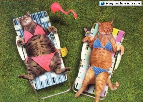 Bikini per gatte