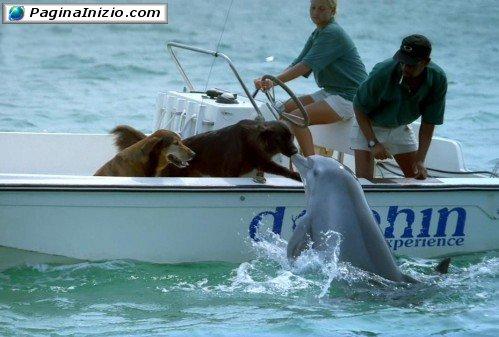 Bacio tra cane e delfino