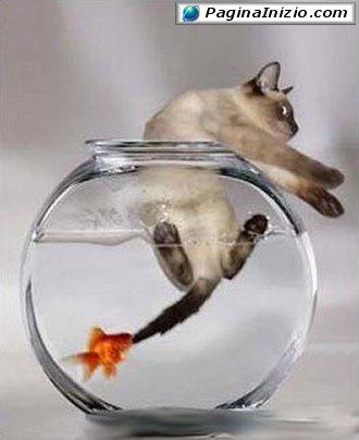 Non esistono più i pesci di una volta...!