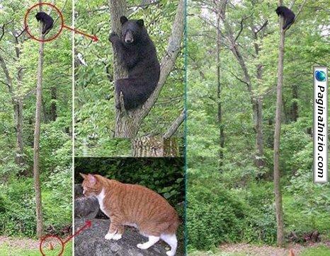 Un orso fifone