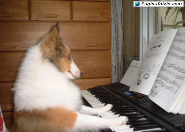 Altro che Beethoven...!