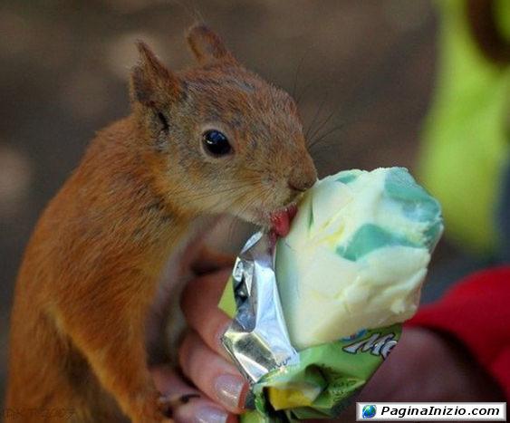 Che buono il gelato!