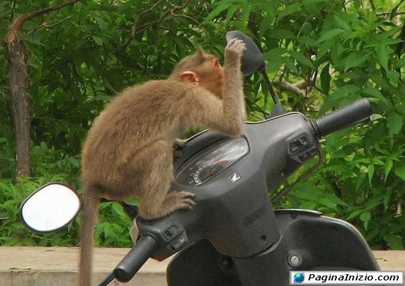 Scimmietta vanitosa