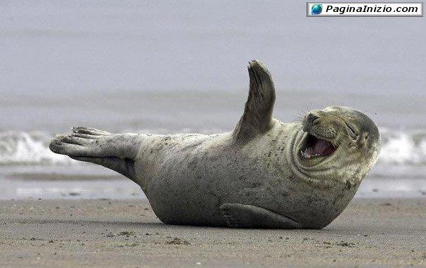 Una foca ilare