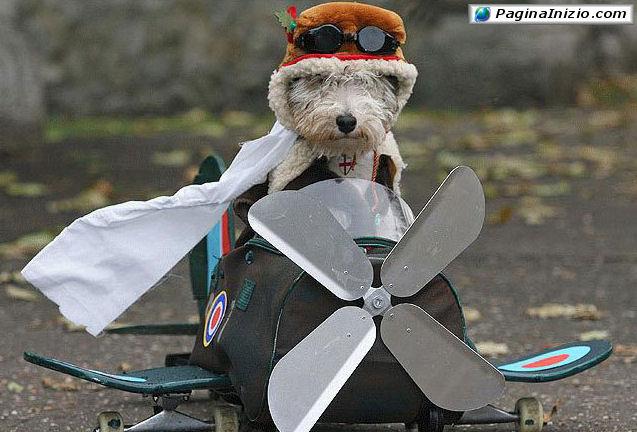 Il cane aviatore