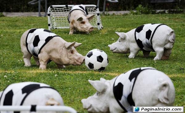 Anche i maiali amano il calcio