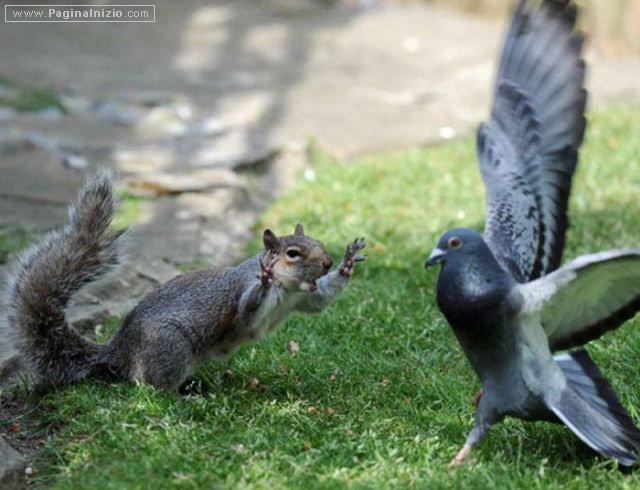 Via da qui, piccione!