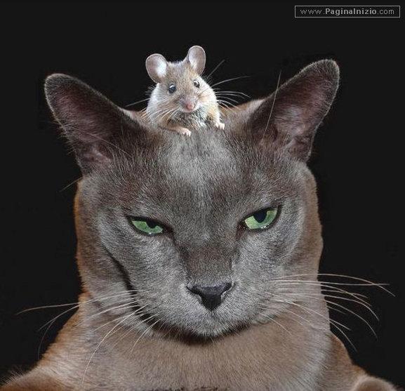 Caro topo, non ti vedo, ma ti sento!