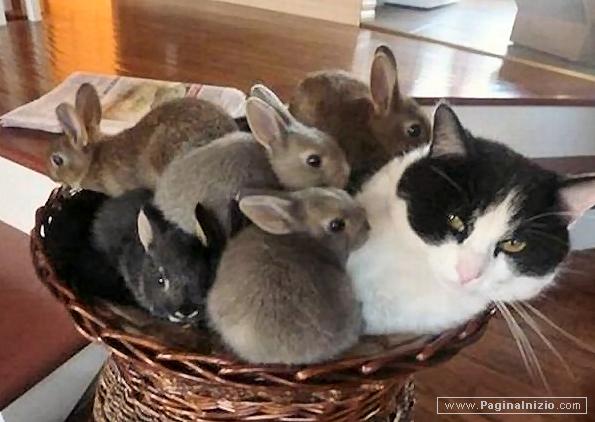 Una cesta affollata