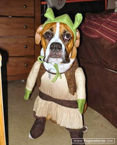 Se Shrek fosse un Boxer...