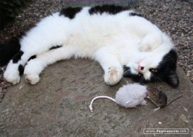 Ma che bel topolino...
