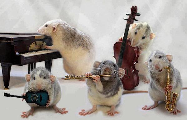 Quando il gatto non c'è, i topi suonano