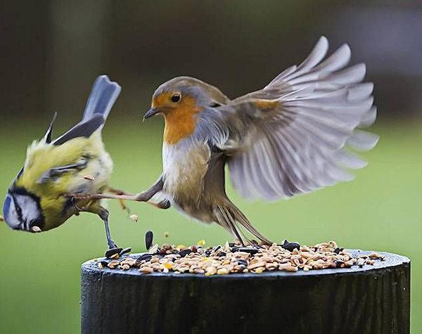 Chi prima arriva, prima mangia!