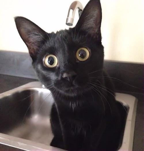 Non vorrai mica farmi il bagno...vero?