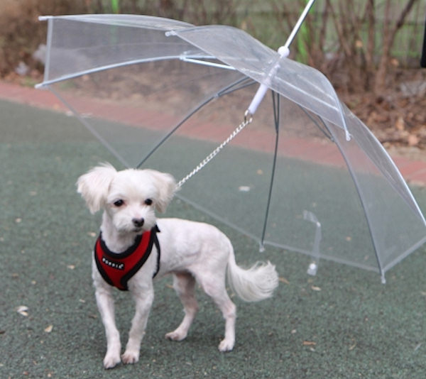 L'ombrello per gli amici a 4 zampe