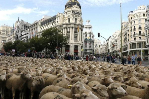 Foto un 39 ondata ovina - Centros de jardineria madrid ...