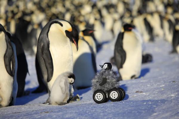 Pinguino robot accettato dal gruppo