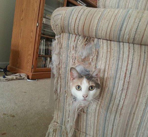 Mi avevano detto di non salire sul divano...