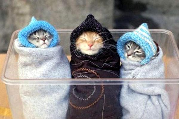 Tre gattini irresistibili