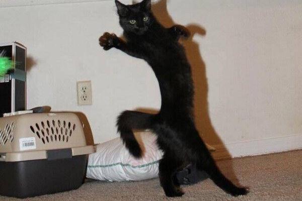 Il cosiddetto passo felino!
