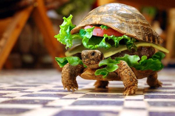 Sembra un panino, ma non lo è!