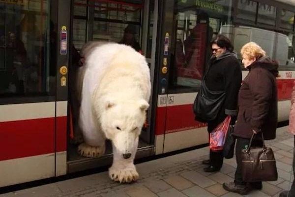 Un orso stanco