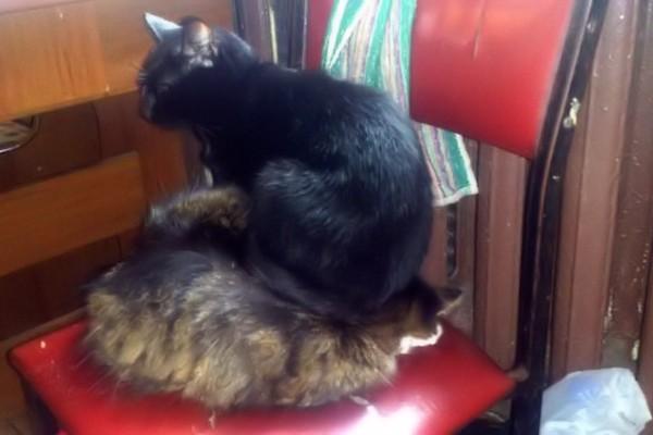 Proprio comodo il nuovo cuscino!