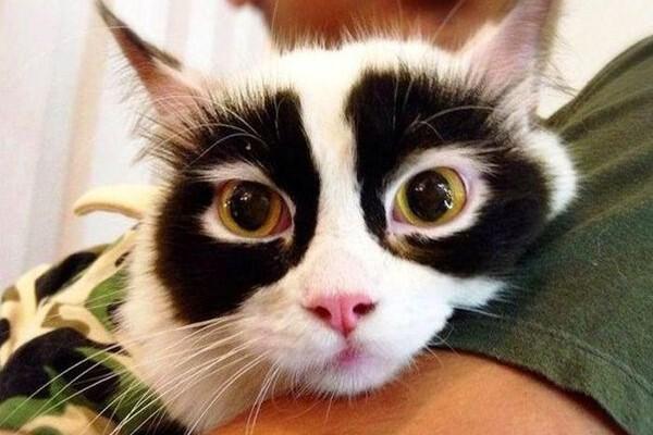 Occhi di gatto!