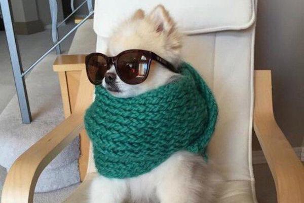 Una cagnolina vanitosa