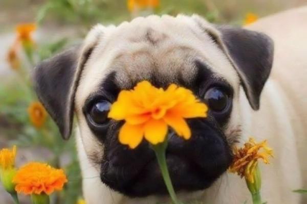 Un fiorellino per te!