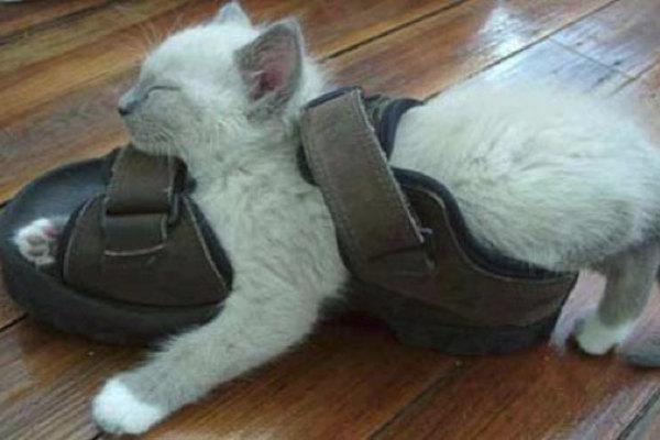 Un gattino stanchissimo