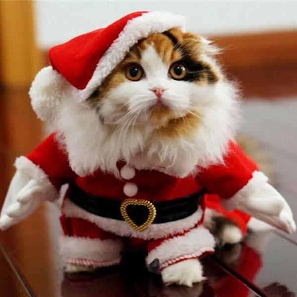 Babbo Natale versione gatto