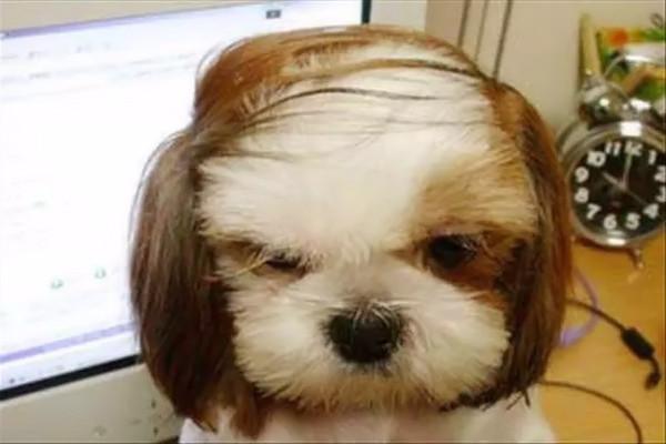Il famoso cane da riporto!