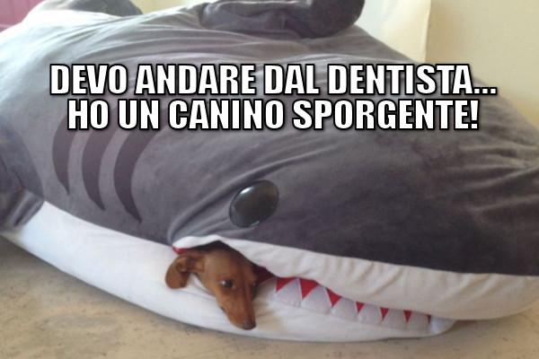 Un canino sporgente!