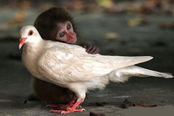 Una dolcissima scimmietta