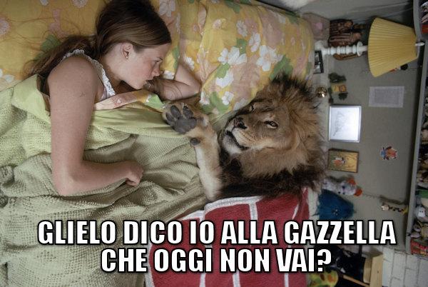 Una notte da leoni...