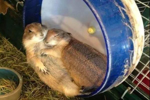 Un caldo abbraccio