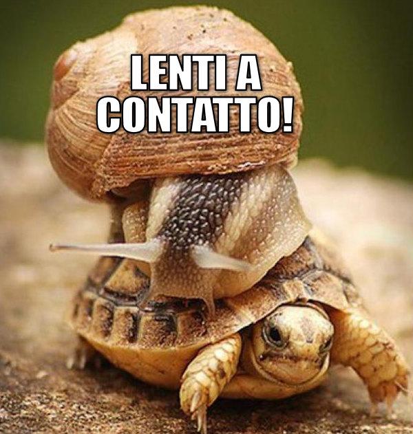 Cosa fanno una chiocciola e una tartaruga vicine?