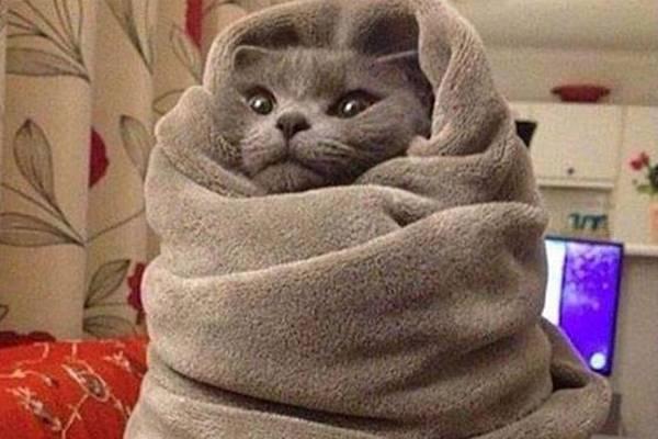 Un gatto freddoloso