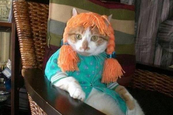 Anna dai capelli rossi versione felina