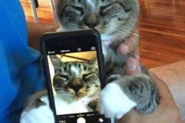 Un gatto vanitoso